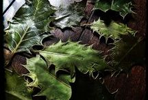 Herbal Enchantment