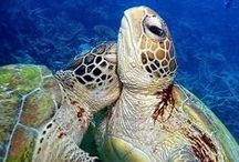 Love of the Ocean