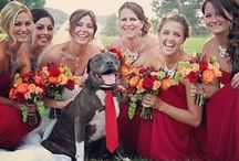 Incluir animais no Casamento / How to include your pet at your wedding / Querem incluir o vosso amigo de estimação no casamento?  Reunimos algumas dicas -> http://bit.ly/animais-no-casamento  Do you want to include your pet in your wedding? We gathered some tips -> http://bit.ly/pet-at-wedding