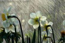 Kevään kuuroihin / Keväällä aurinko jo lämmittää, mutta sadekuurot kastelevat yhtä lailla. Näissä vaatteissa selviät työmatkat mukavasti kuivana.