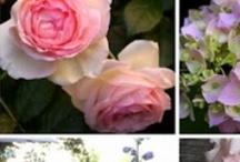 Gardening / Leuke ideeën betreffende de planten in de tuin, dus zeg maar over het schilderen met bloemen ... / by Ingrid Verschelling