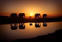 Beautyfull-Animals