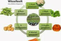 Kruiden- en moestuintje / growing herbs and vegetables