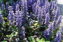 Tuinieren: schaduwplanten