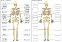 Het menselijk lichaam / by Ingrid Verschelling