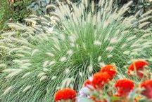 Tuinieren: grassen / All sorts of grasses