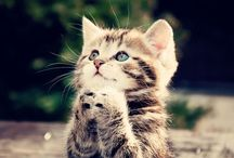 Cutest cats / by M. M.