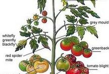 Tips en trucs / Handige trucjes, slimme oplossingen, zaaitips en heel veel meer om je eigen groente, kruiden, kiemen en fruit te kweken.