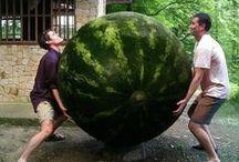 Hoe groot is jouw oogst? / Hoe blij en trots kun je zijn op je oogst?