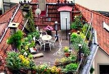 Tuin in de stad / Stadstuinieren, balkontuinen, daktuinen. Rooftop Gardens   Urban Gardening