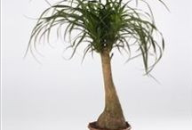 """Kamerplanten / Verzorging / kijk bij """"Detox"""" voor meer planten, die de lucht zuiveren!"""