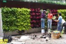 Verticaal tuinieren / Heb je weinig ruimte, ga dan de hoogte in!