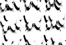 ___Butterfly___