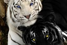 Animals / Amazing animals!