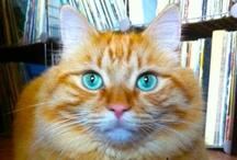 Orange Cat Love / For the love of orange cats...