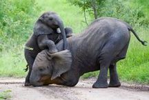 Elephants <3 / Elephants, I heart them / by K C