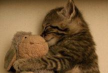 Animals..(: