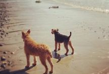 Noodles the Welsh Terrier / My favourite photos of Noodles and some of his pals