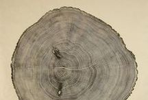 cross section / the most beautiful panorama of timber | history of the wood uncovered