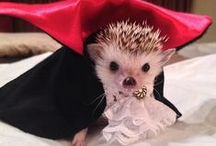 Love a Hedgehog