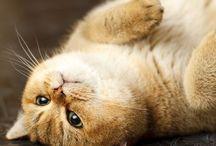 Possible pets (& beautiful animals)