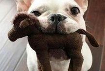 LOL pets / Funny favorite pet pins from Denton Animal Shelter Foundation.