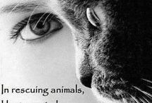 Rescue and Animal Welfare / All things related to animal welfare and adoption.
