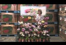 The Floral Beat / Le Ann Castro brings informative tips and fresh ideas for decorating with cut flowers and potted plants. Don't miss a Beat!  Presented by General Produce, Sacramento, California.
