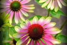 photographs of flowers / by Janette Cervin