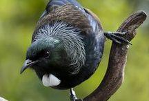 New Zealand flora and fauna