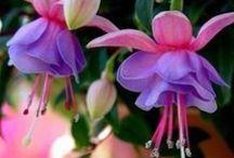 Ali Express / gardening horticulture