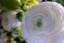 Leikkokukat / #flowers #leikkokukat