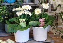 Ruukkukukat - potted flowers