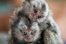 Animals / by Vivian Goldbloom