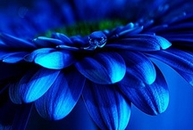 Colour:  Moody Blues