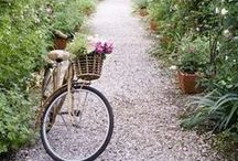 Bicycles & Flowers