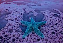 Ocean:  Shells & Starfish