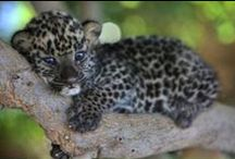 Csodás állatvilág