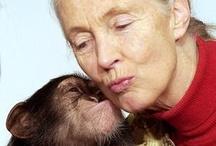 People: Jane Goodall
