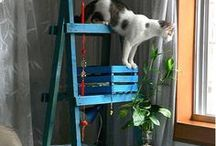 Nice cat trees / A collection of nice ideas how to build a tree for your cat.
