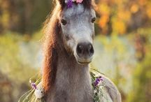 Adorable Animals / Cute / by Persephone Saturn