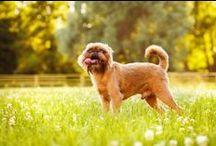 Dog Tips and Tricks