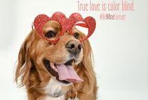 Valentine's Day for Pet Parents!