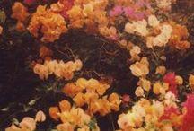 .INSPIRE.spring.