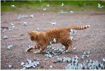 Meow / by Caroline Jones