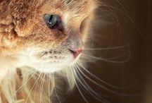 Awww Kitten...Meow.. / All about Sweet Kittys <3