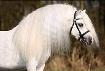 Horse Spirit <3 / About the Beautiest Creatures of this Planet Riding Horses is for me to be Free like the Wind Yes Iàm a Horse Lover