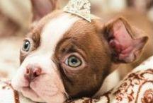 Best Animal Pics! / Best animal pics to brighten your day!    #cute #cuteanimals #bestanimalpics #animalphotos #naturephotography #donteatanimals #animallovers #fluffyanimals
