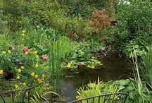 Just Add Water / Adding water to your garden is a great way of supporting wildlife especially amphibians! It also creates a tranquil space for you to enjoy.  Here's our pond inspiration