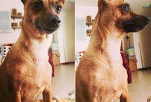 My dog / Guenda